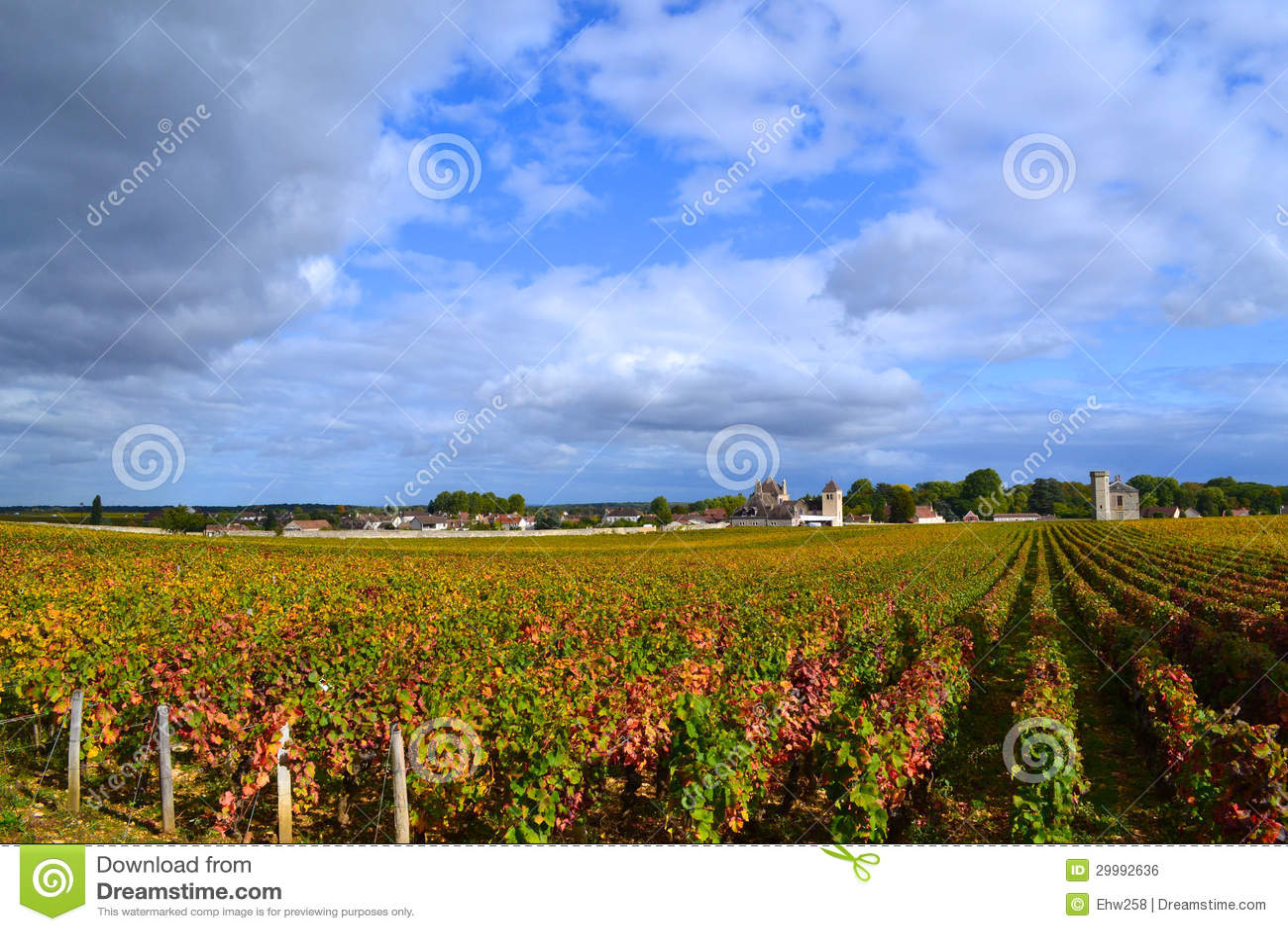 Vineyard burgundy france royalty free stock image 29992636 - The splendid transformation of a vineyard in burgundy ...