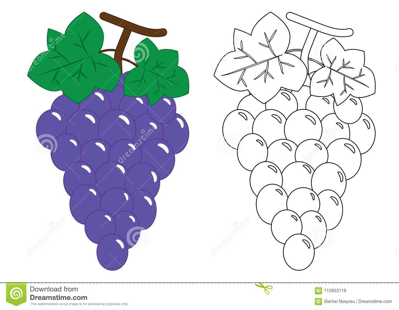 Grapes Activity For Preschool Children Coloring Book Stock Vector