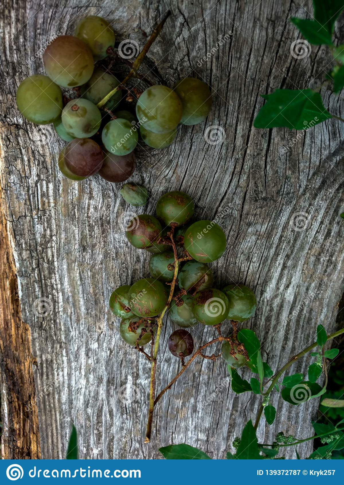 Grapes on a bench