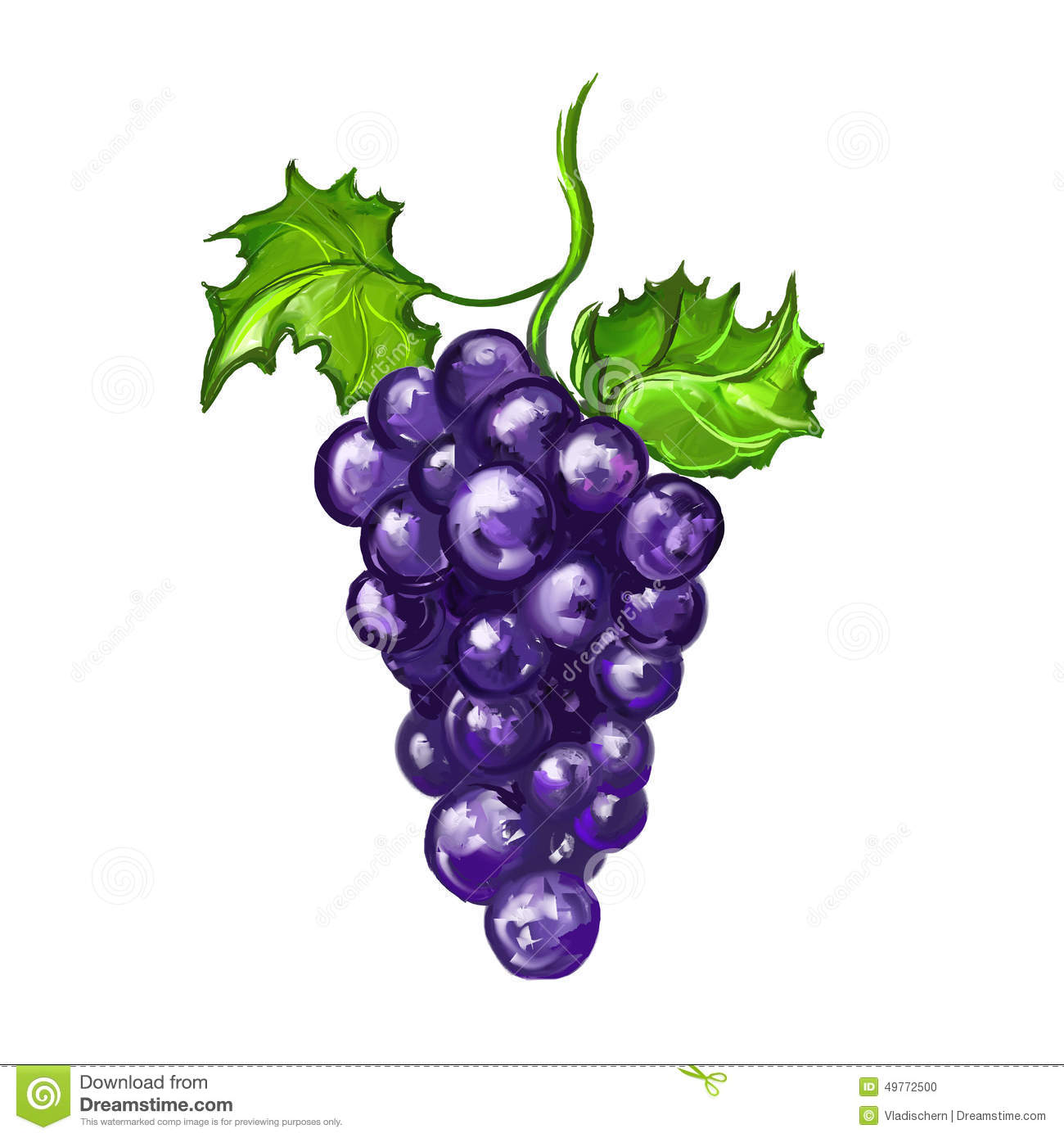grapes fruit vector illustration hand drawn stock vector clip art grape vine clip art grapes black and white