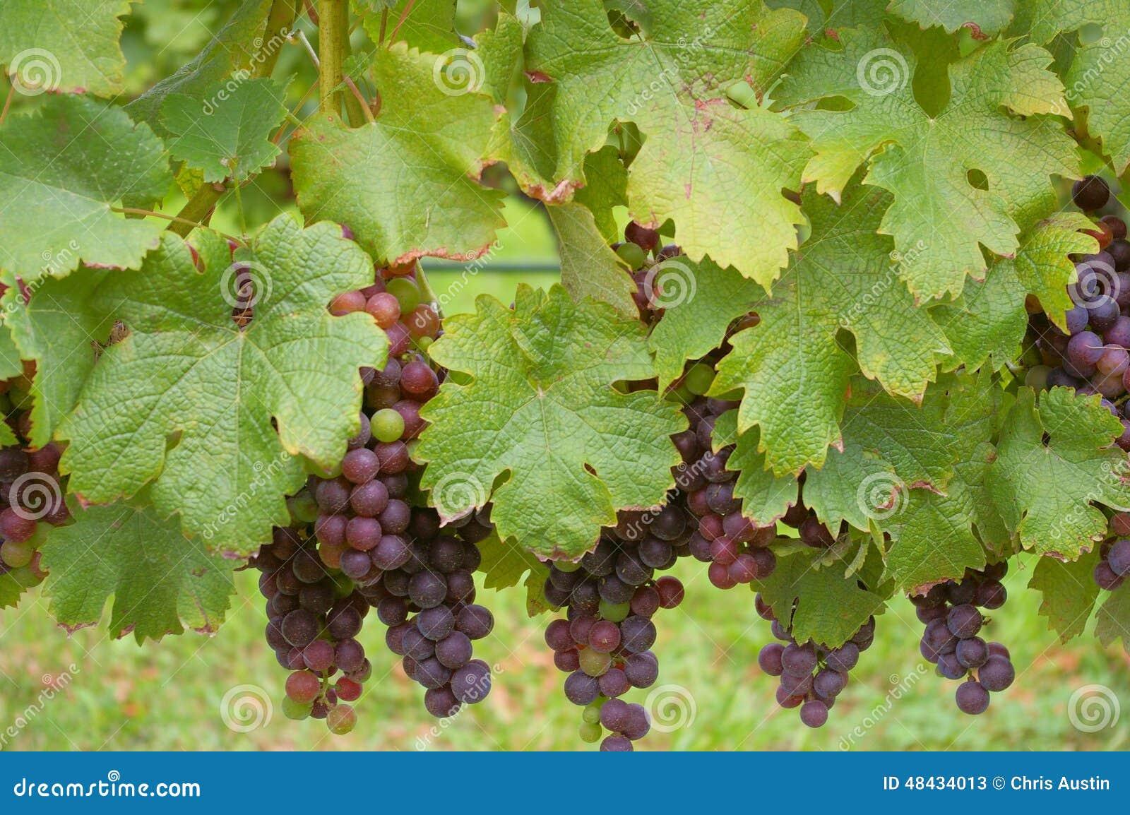 Vine To Wine Long Island