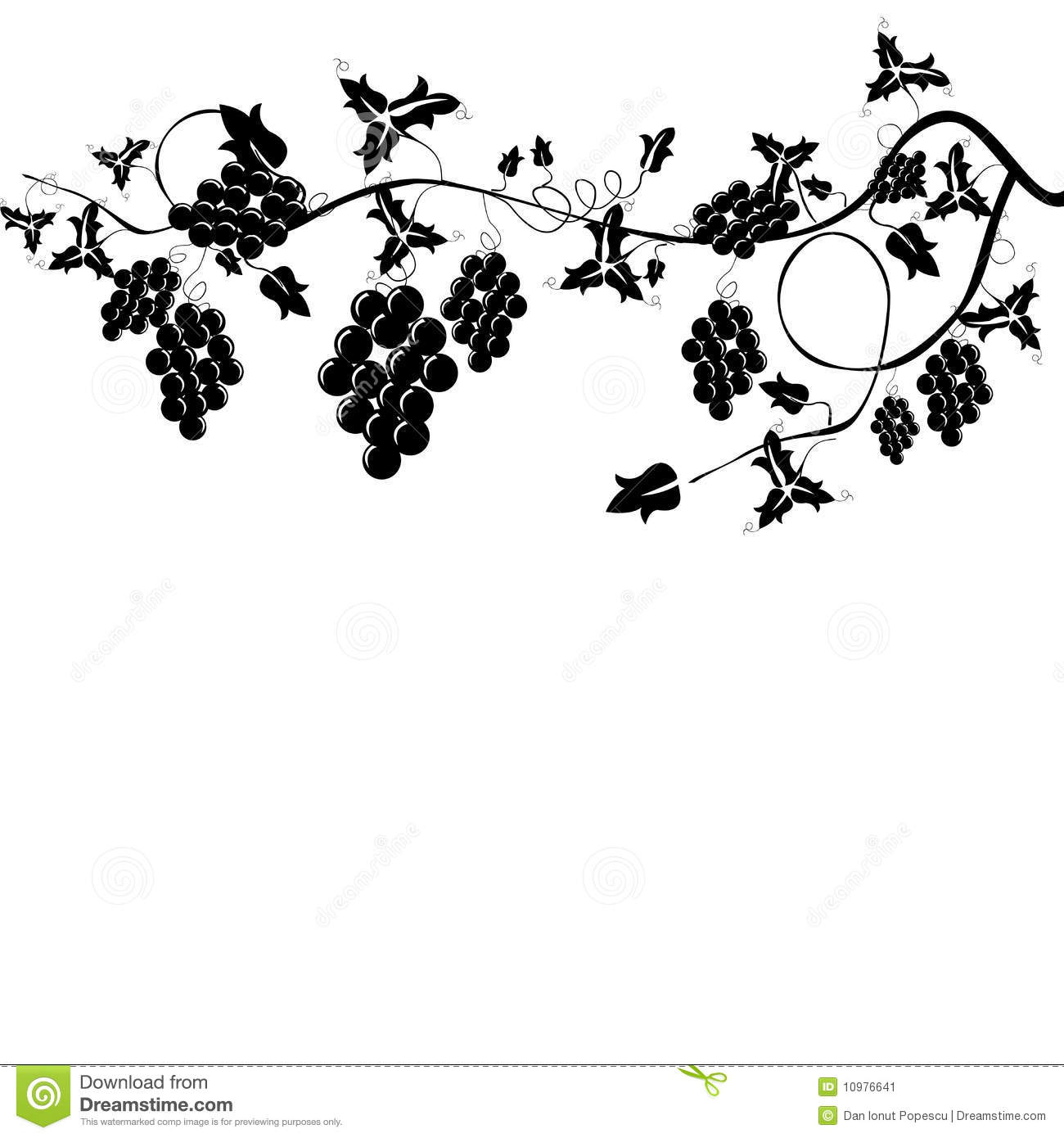 Grapevine Stock Image - Image: 10976641
