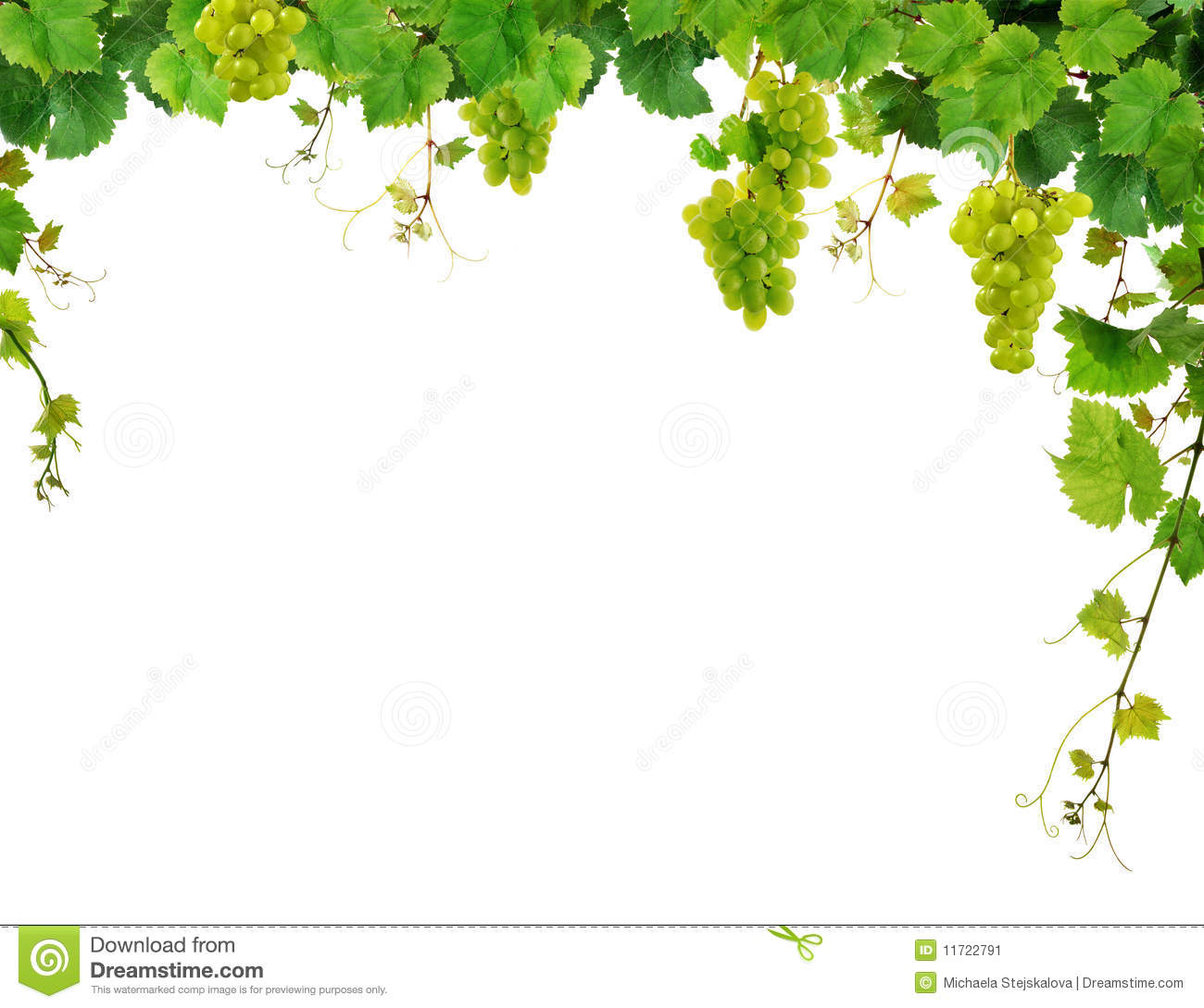 Grapevine Border With Grapes Stock Image - Image: 11722791