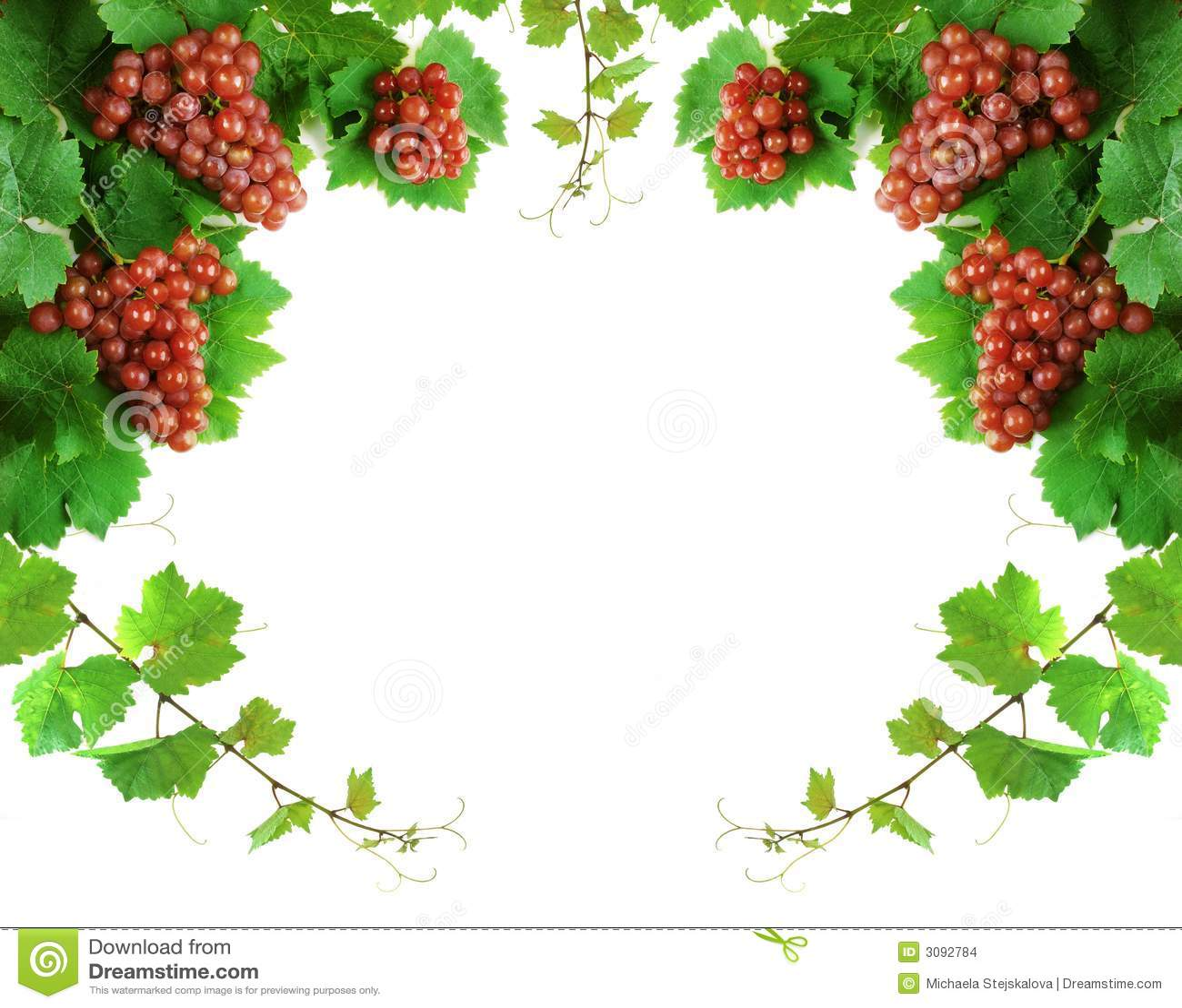 Grapevine Decoration Border Stock Images - Image: 3092784