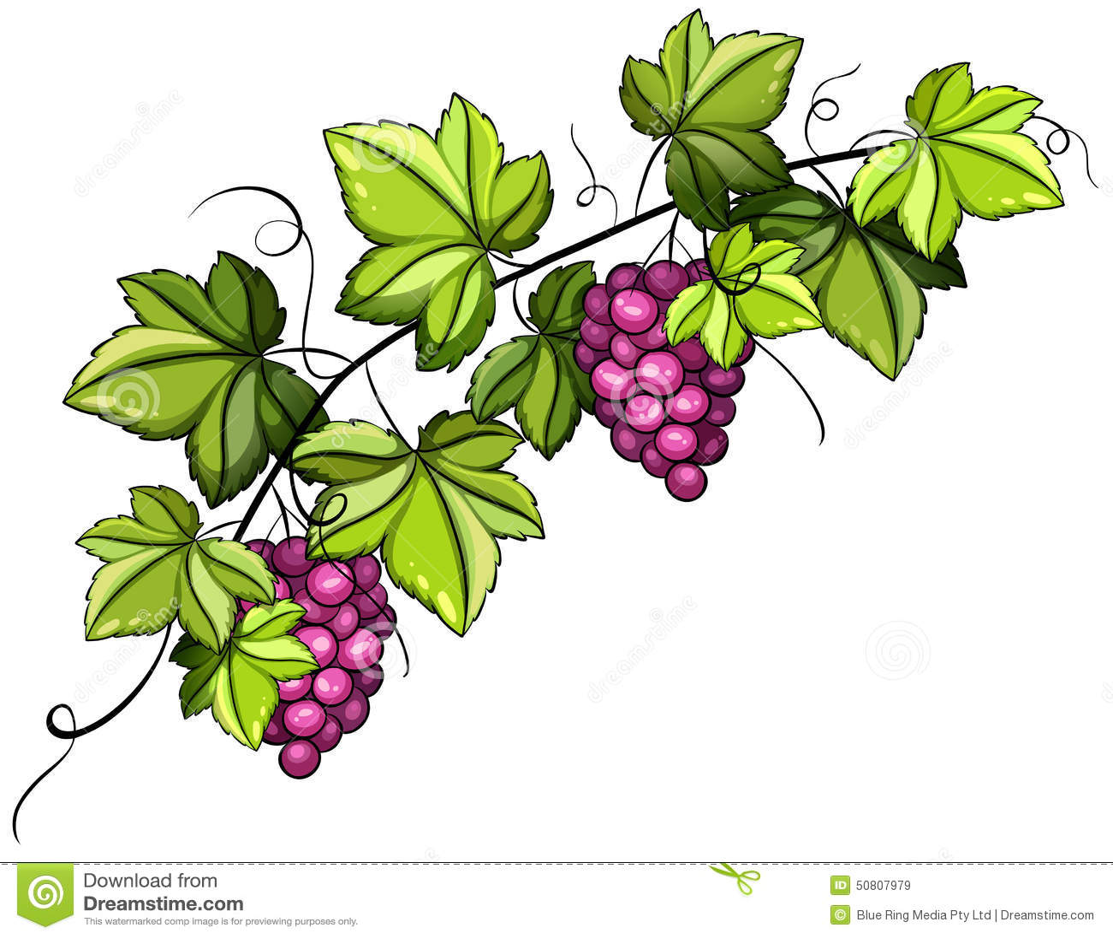 grapevine stock illustrations 4 542 grapevine stock illustrations rh dreamstime com grapevine wreath clip art grape vine clip art images