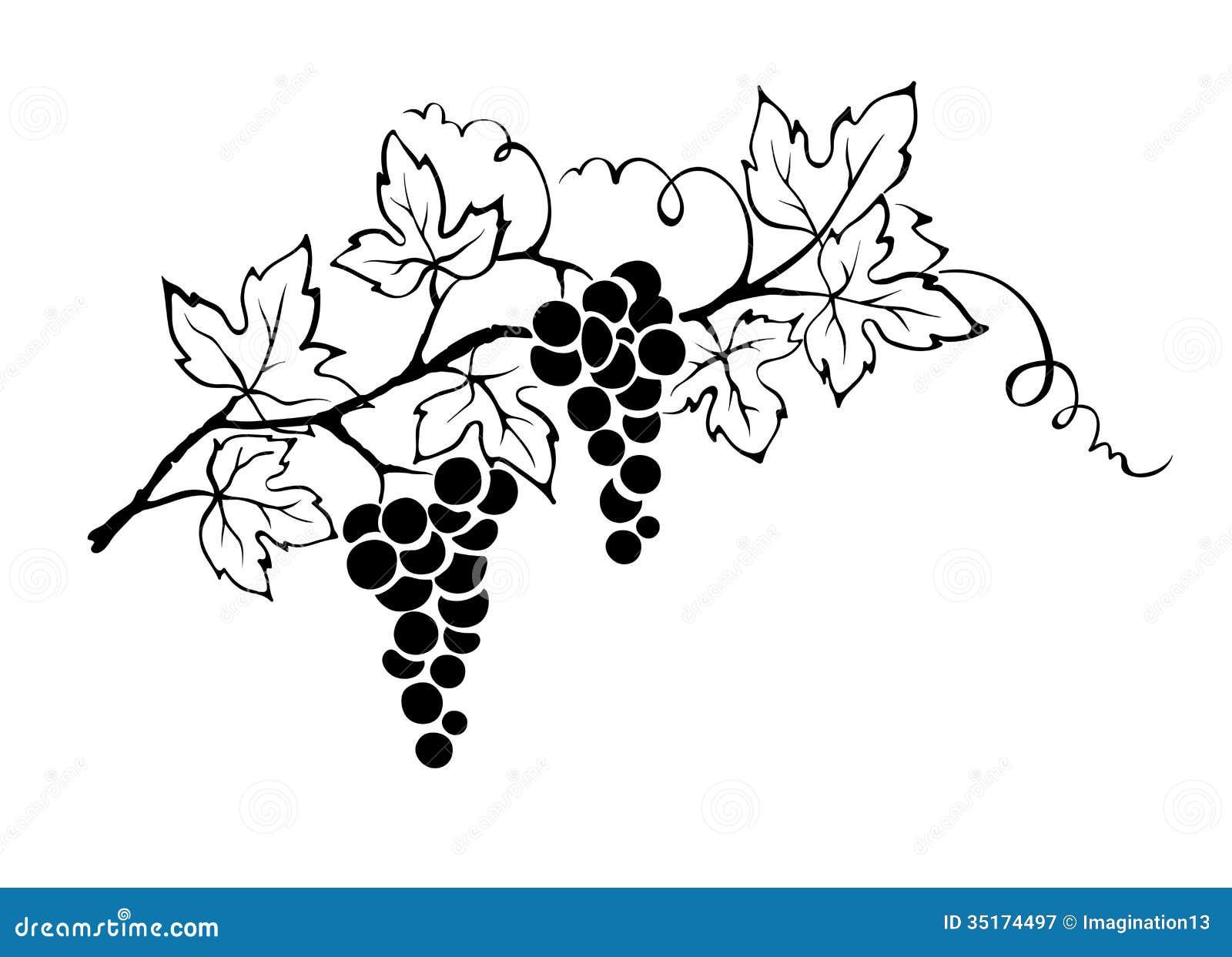 Grapevine stock vector. Illustration of gourmet ...