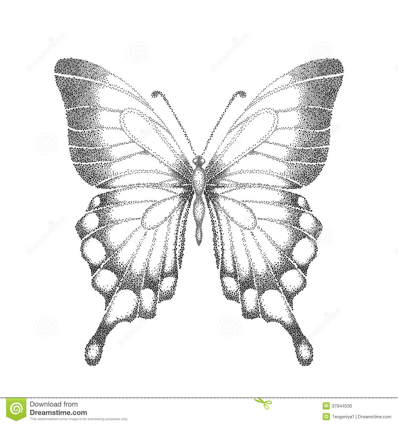 graphic black and white butterfly handdrawn cont stock