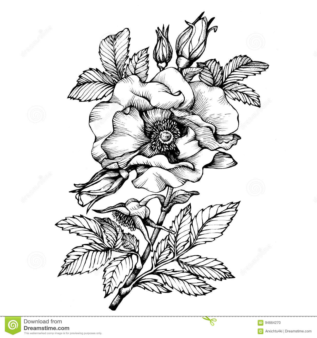 Graphic the branch flower dog rose names japanese rose rosa rugosa download comp mightylinksfo