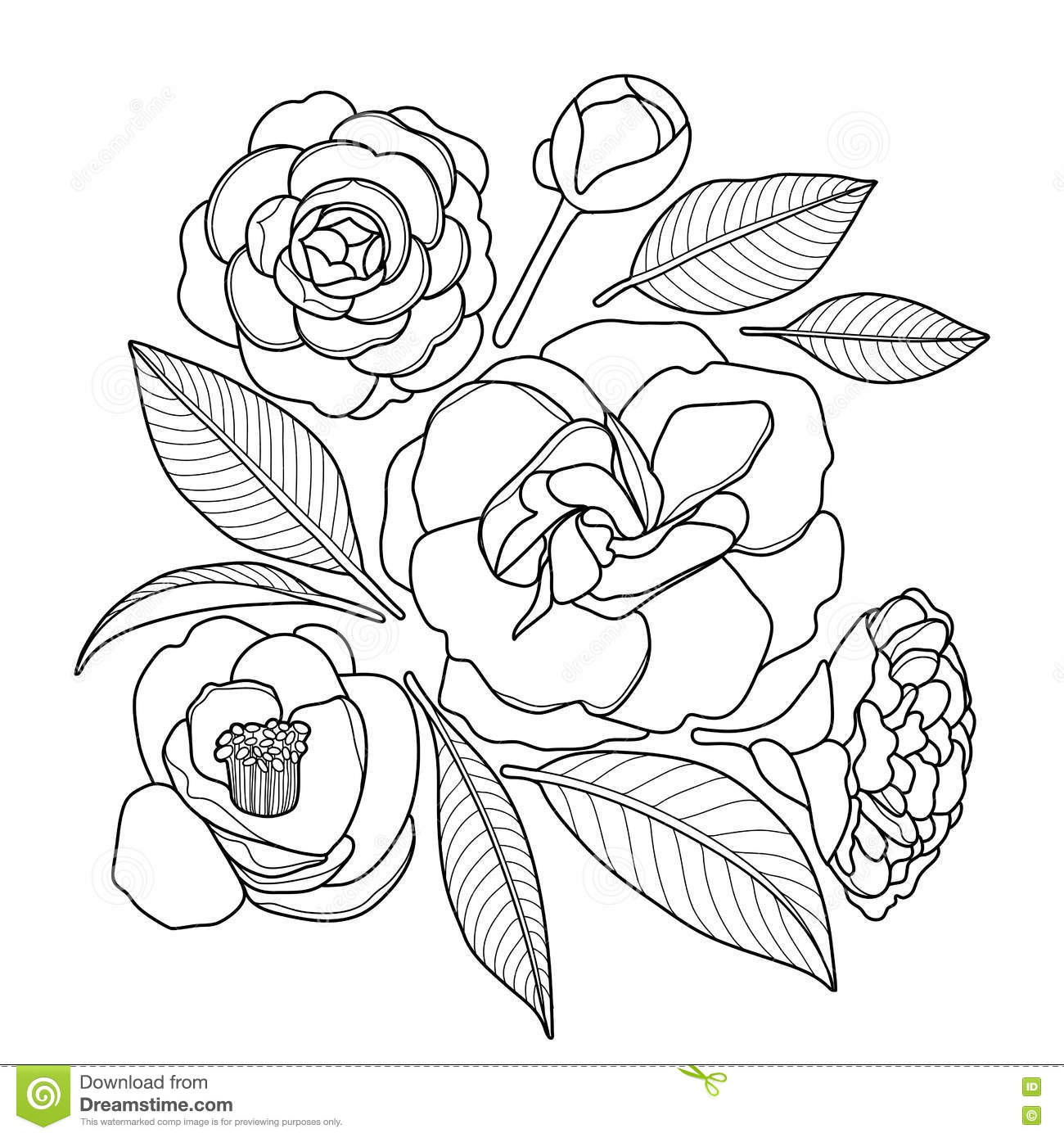 Graphic Camellia Set Stock Vector Illustration Of Design