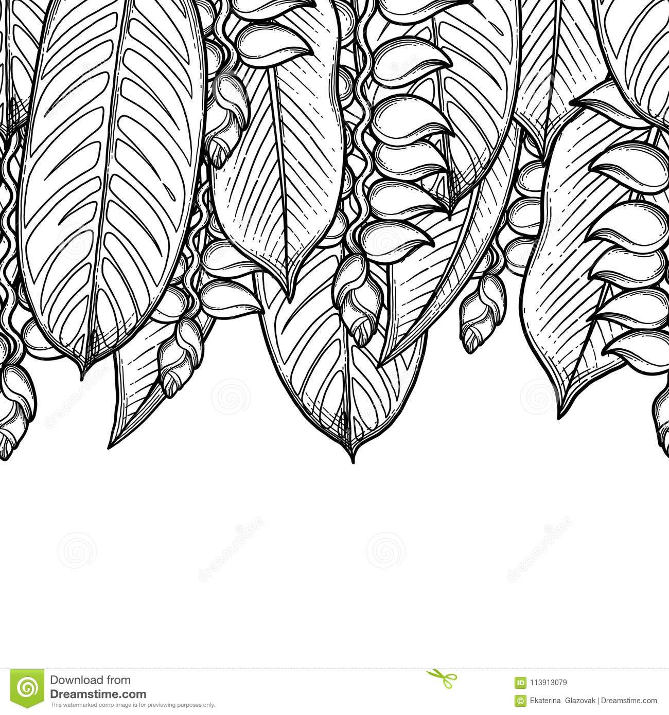 Graphic Heliconia Leaves And Flowers Vector Exotic Design Seamless Border Coloring Book Page For Adults Kids