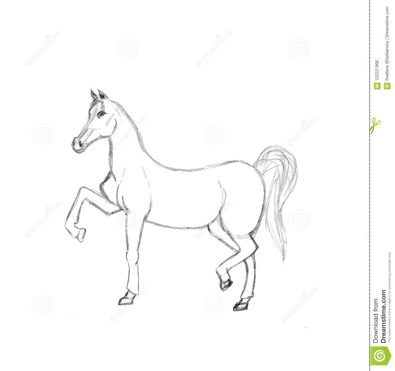 Graphic illustration of horse pencil sketch of stallion isolated on white background hand drawn