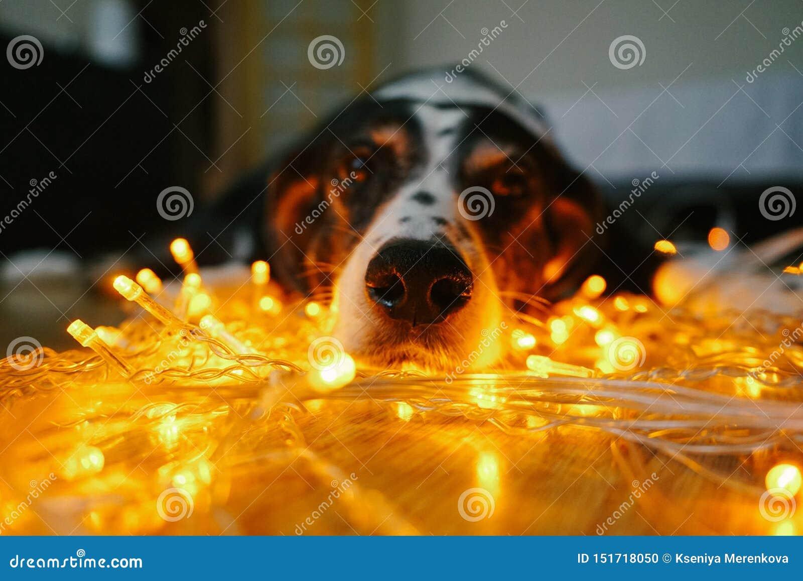Grappig hondgezicht met Kerstmislichten