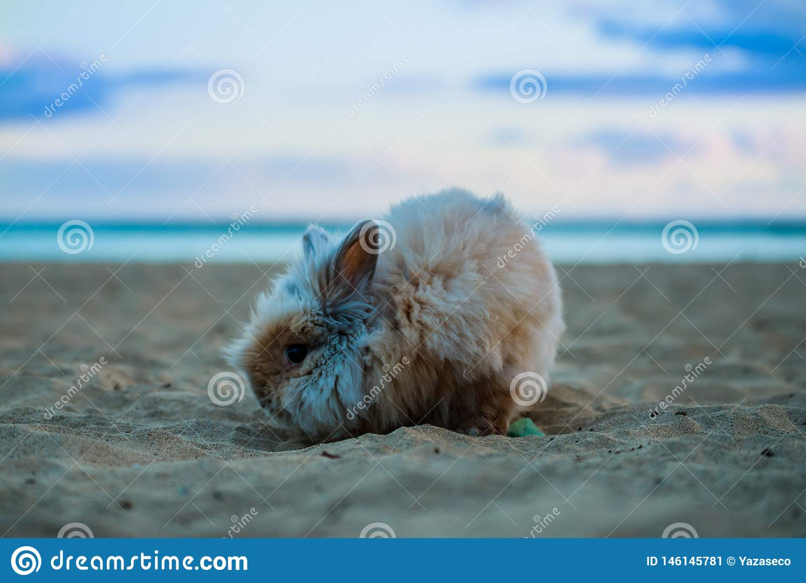 Grappig Konijn in de strandhuisdieren