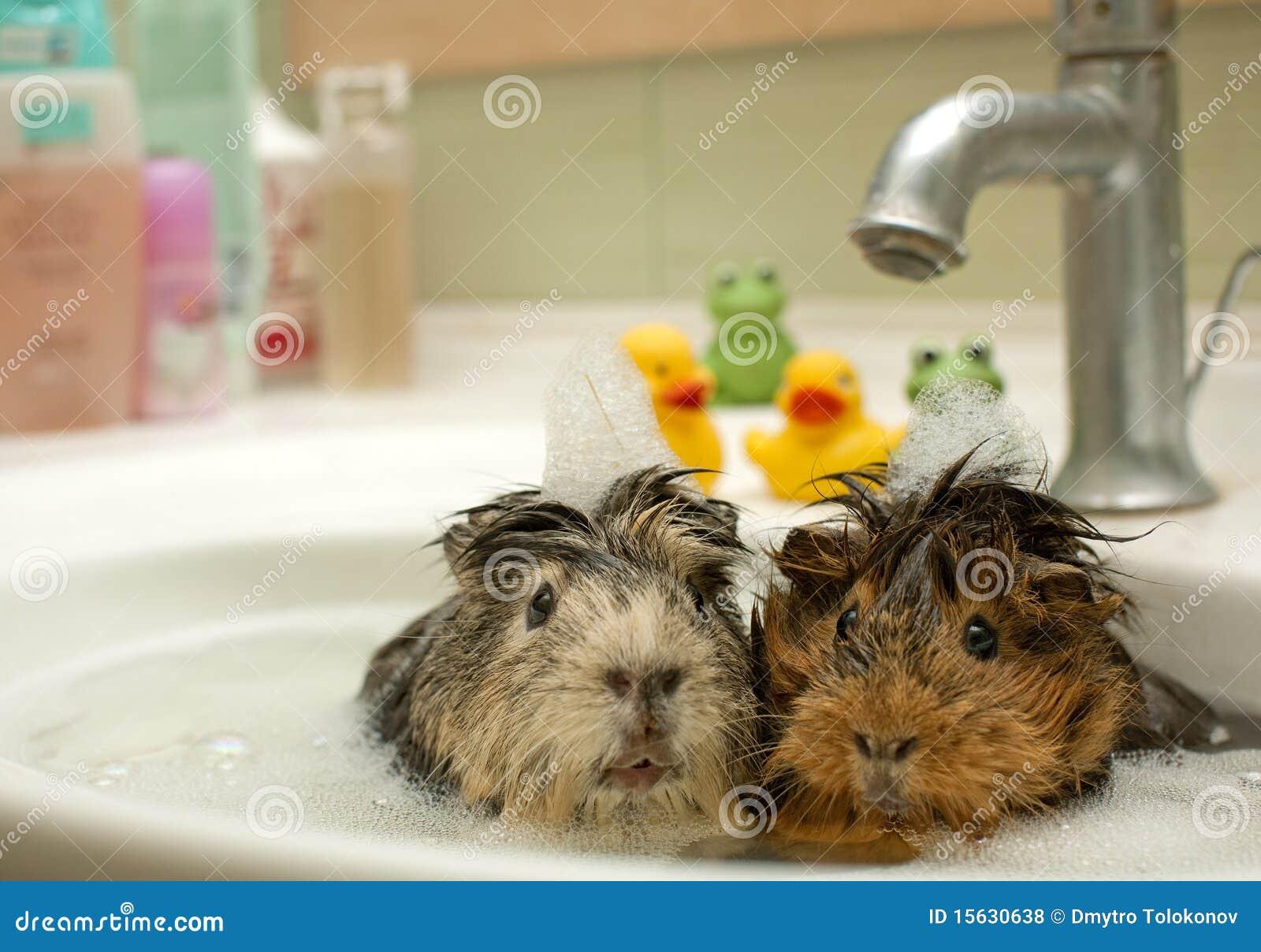 Bekend Grappige dieren stock foto. Afbeelding bestaande uit life - 15630638 @AS11
