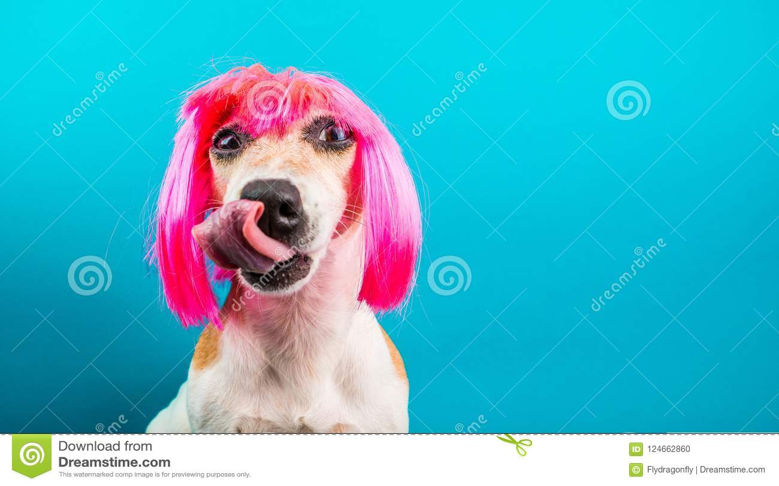 Grappige hond in roze pruik het wachten op een heerlijke maaltijd die foog likken Achtergrond voor een uitnodigingskaart of een g