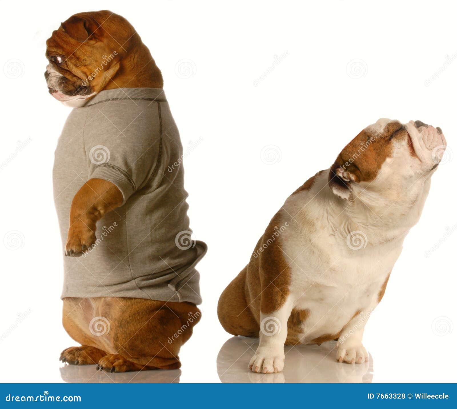 Grappige hondstrijd