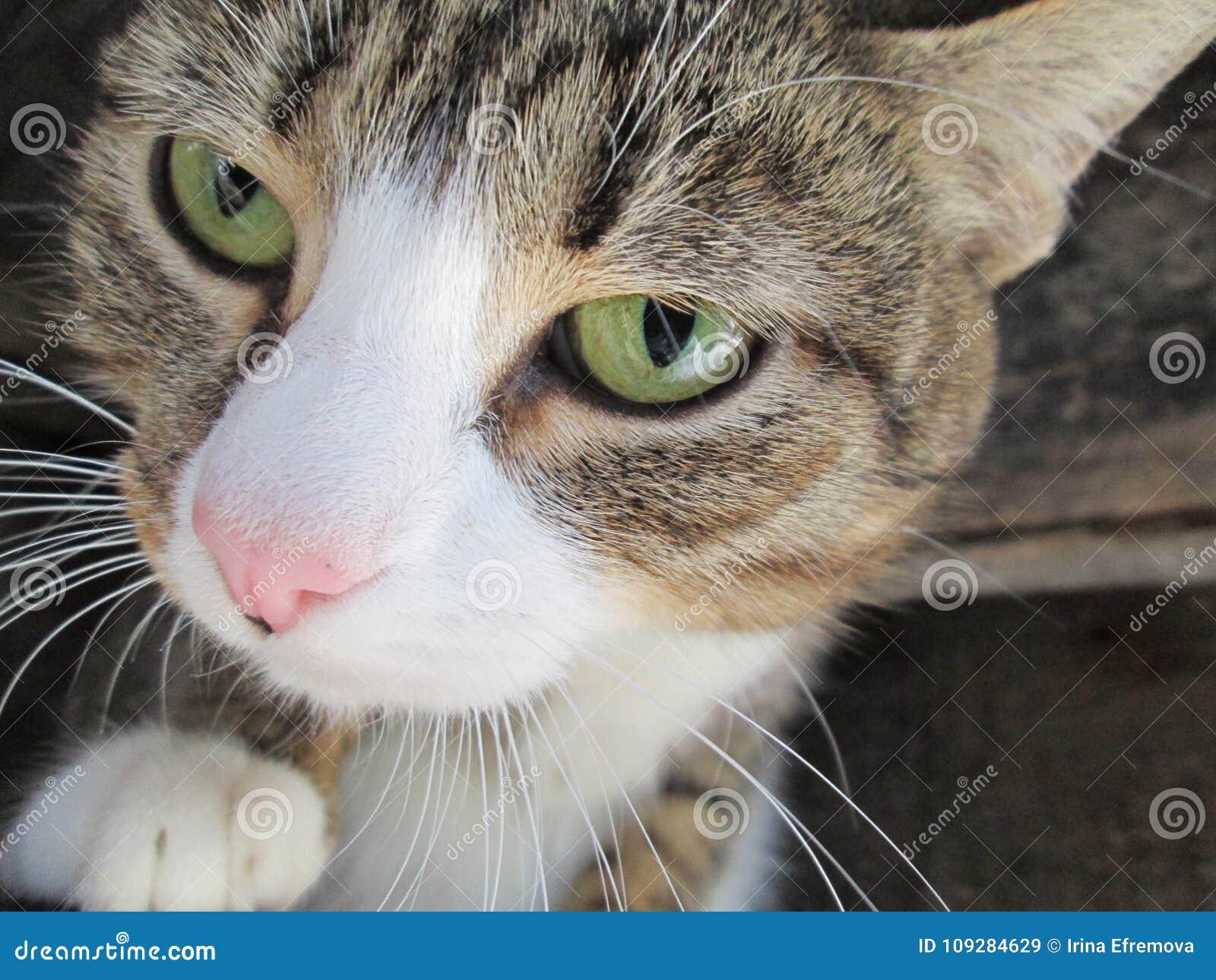 Grappige kat met groene ogen