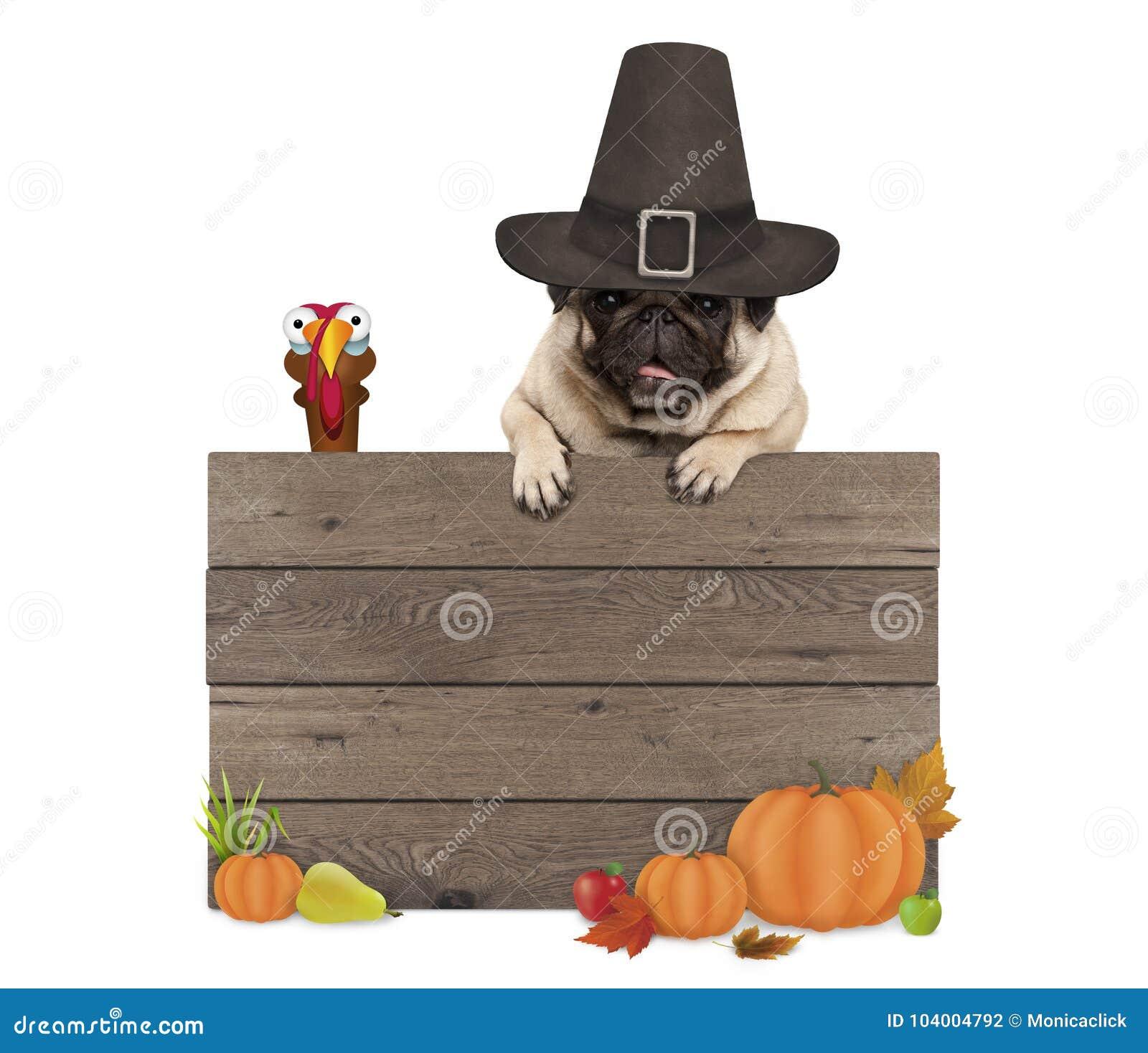 Grappige pug hond die pelgrimshoed dragen voor Thanksgiving day, met leeg houten teken en Turkije