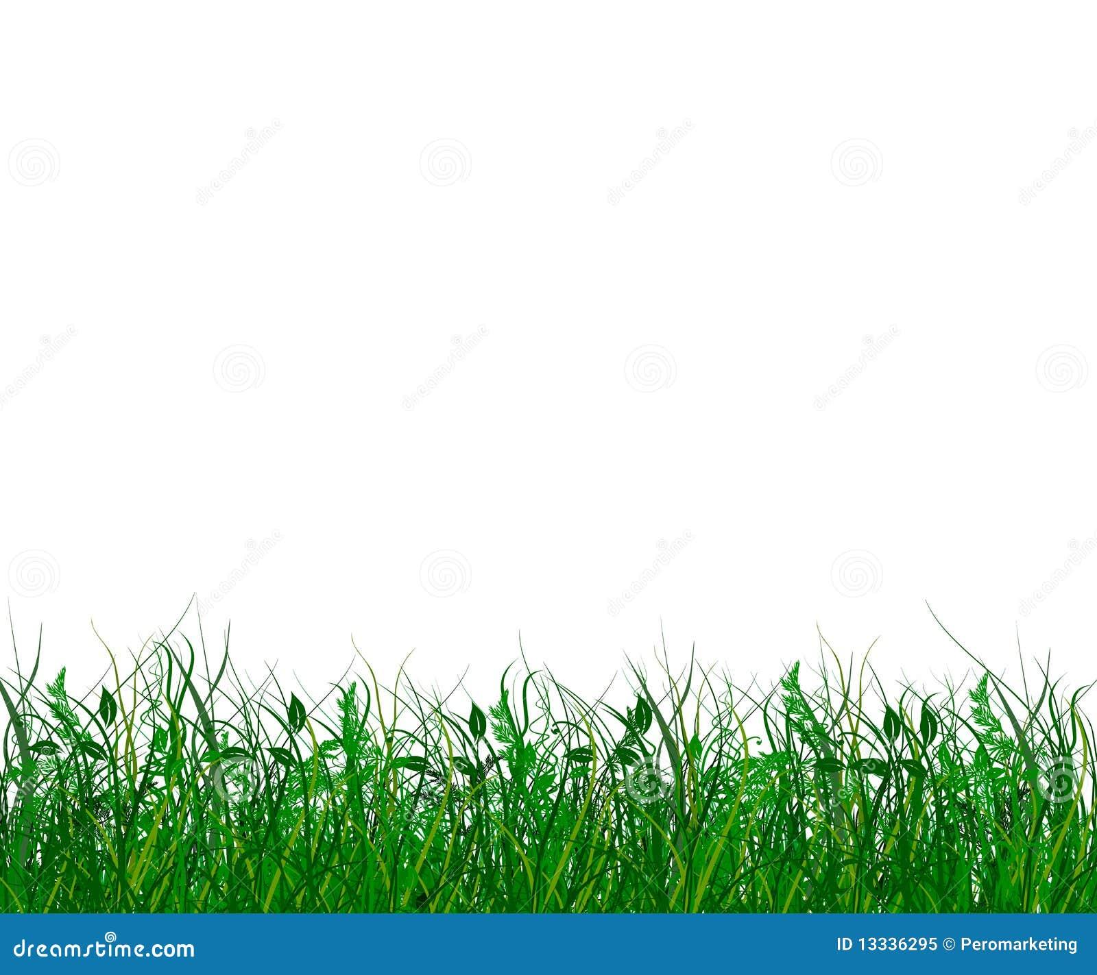 Gras świeża zieleń