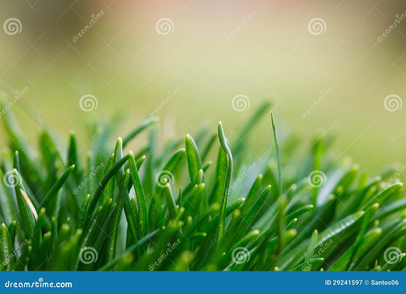 Download Gras imagem de stock. Imagem de grama, verde, fresco - 29241597