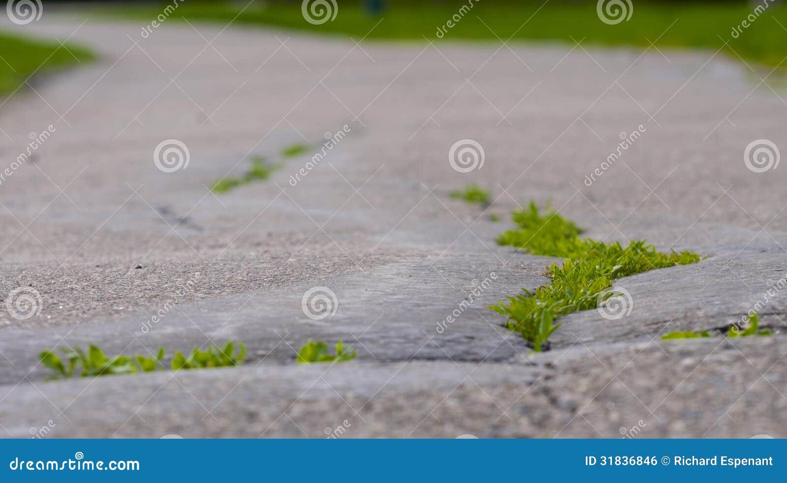 Gras auf der Spur 2
