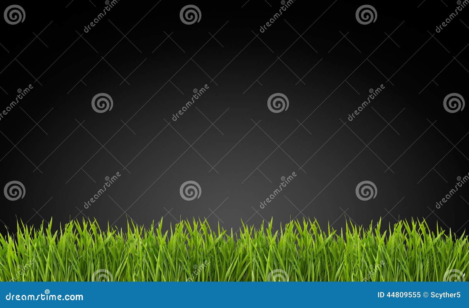 Gras auf einem schwarzen Hintergrund