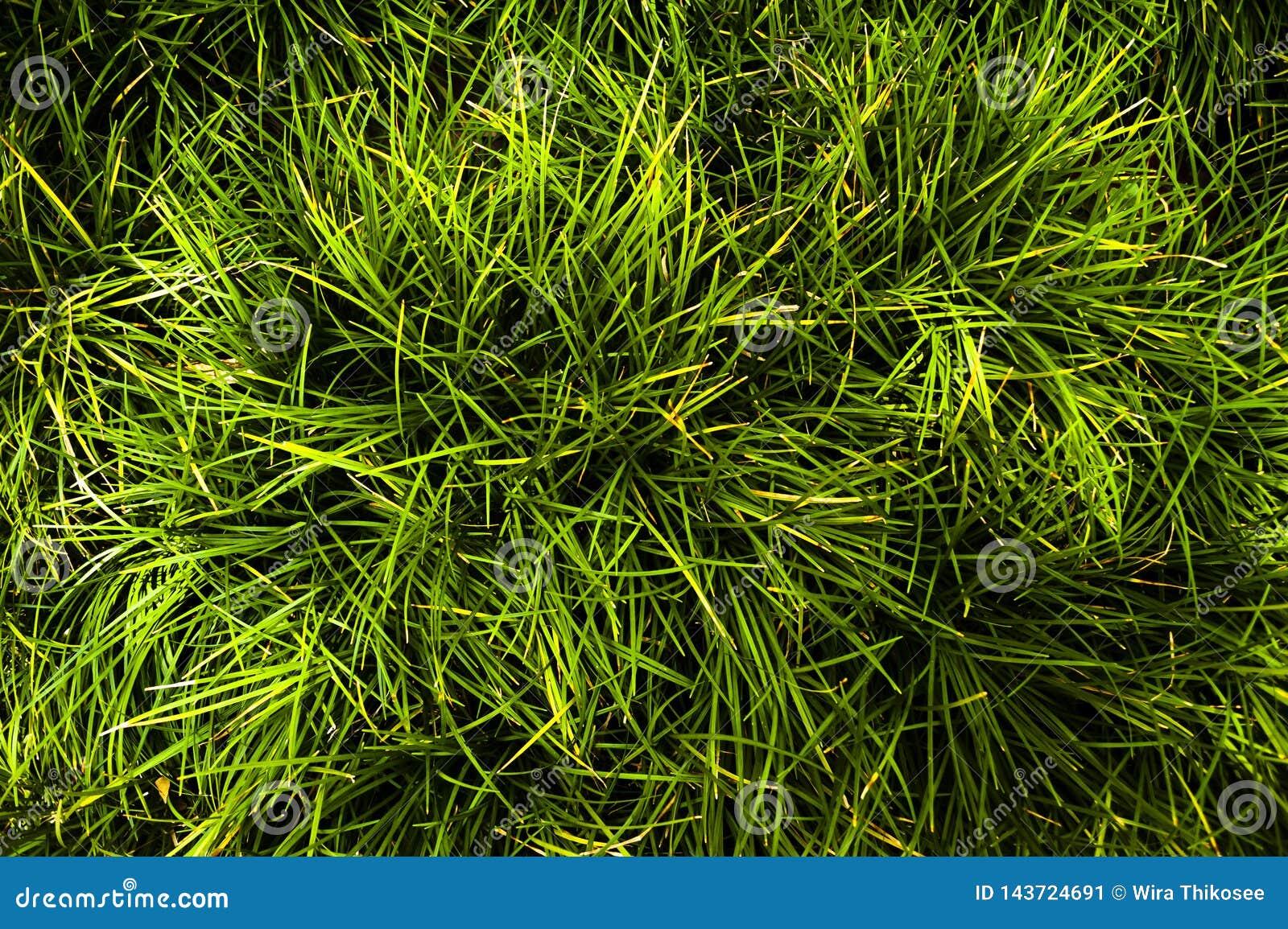 Gras auf Feld, Blatt sind viel Linie