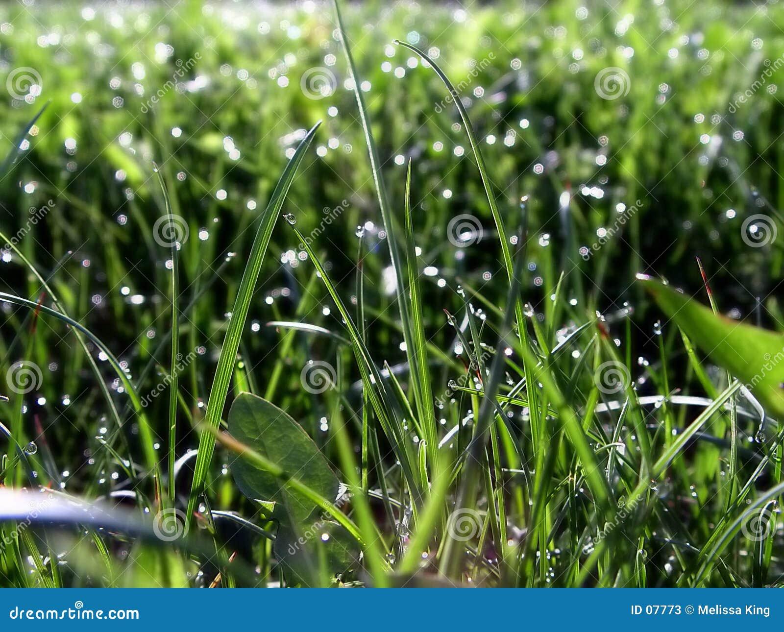 Gras auf Rasen