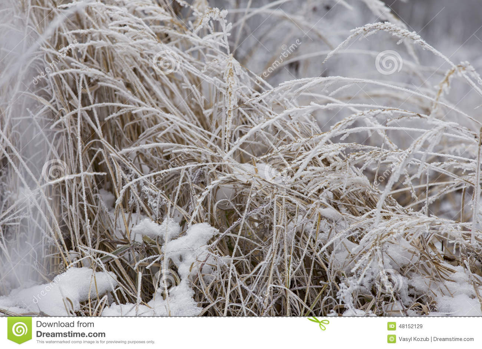Gras dat met vorst wordt behandeld