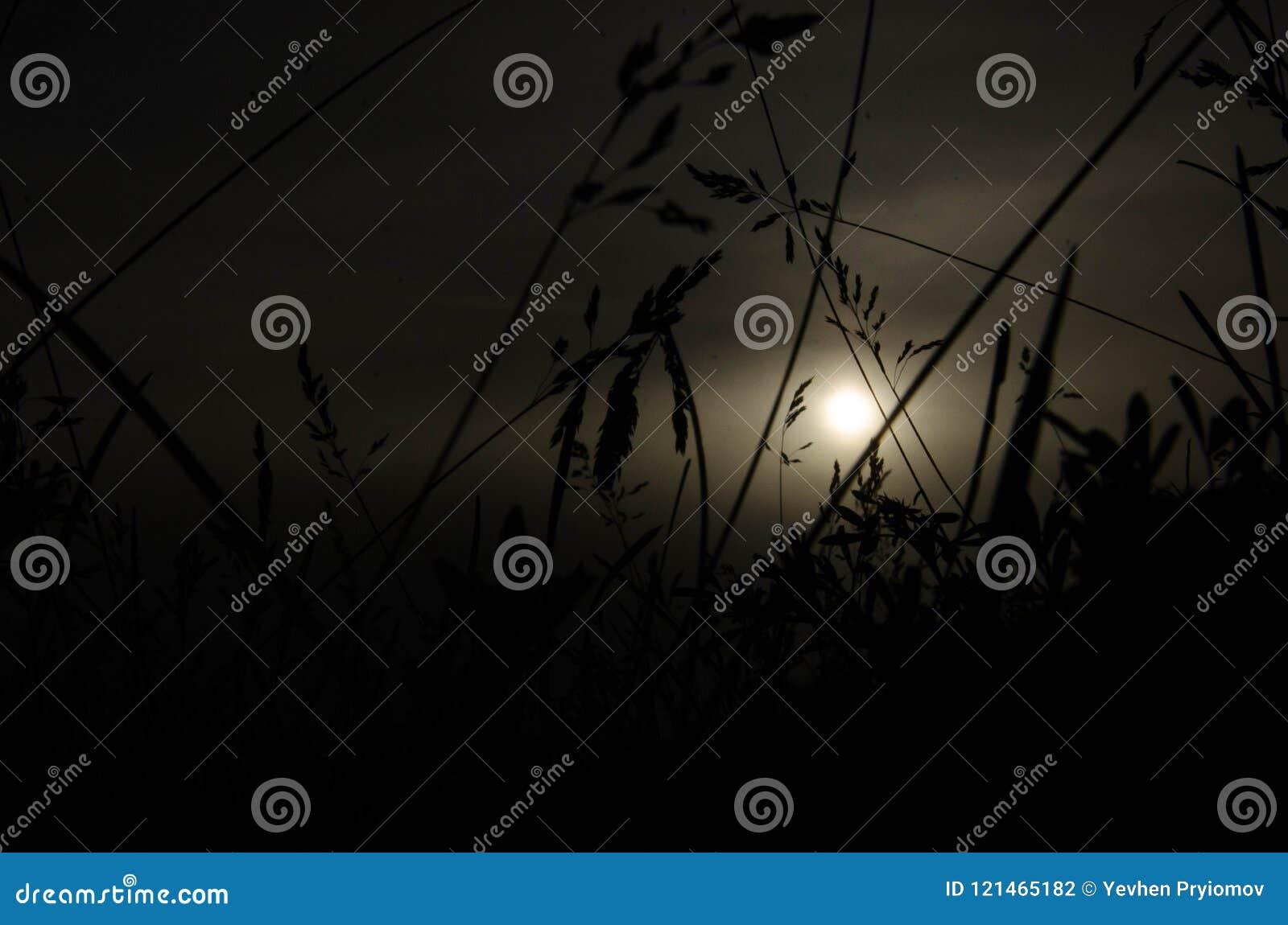 Gras in der Nacht