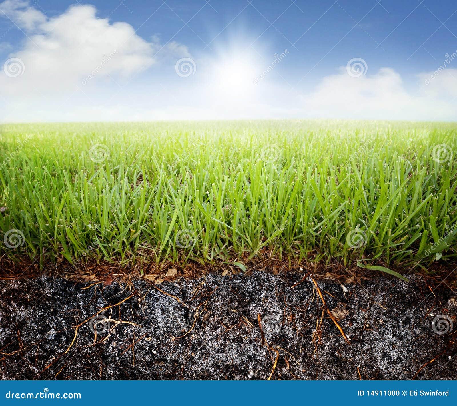 Gras en grond