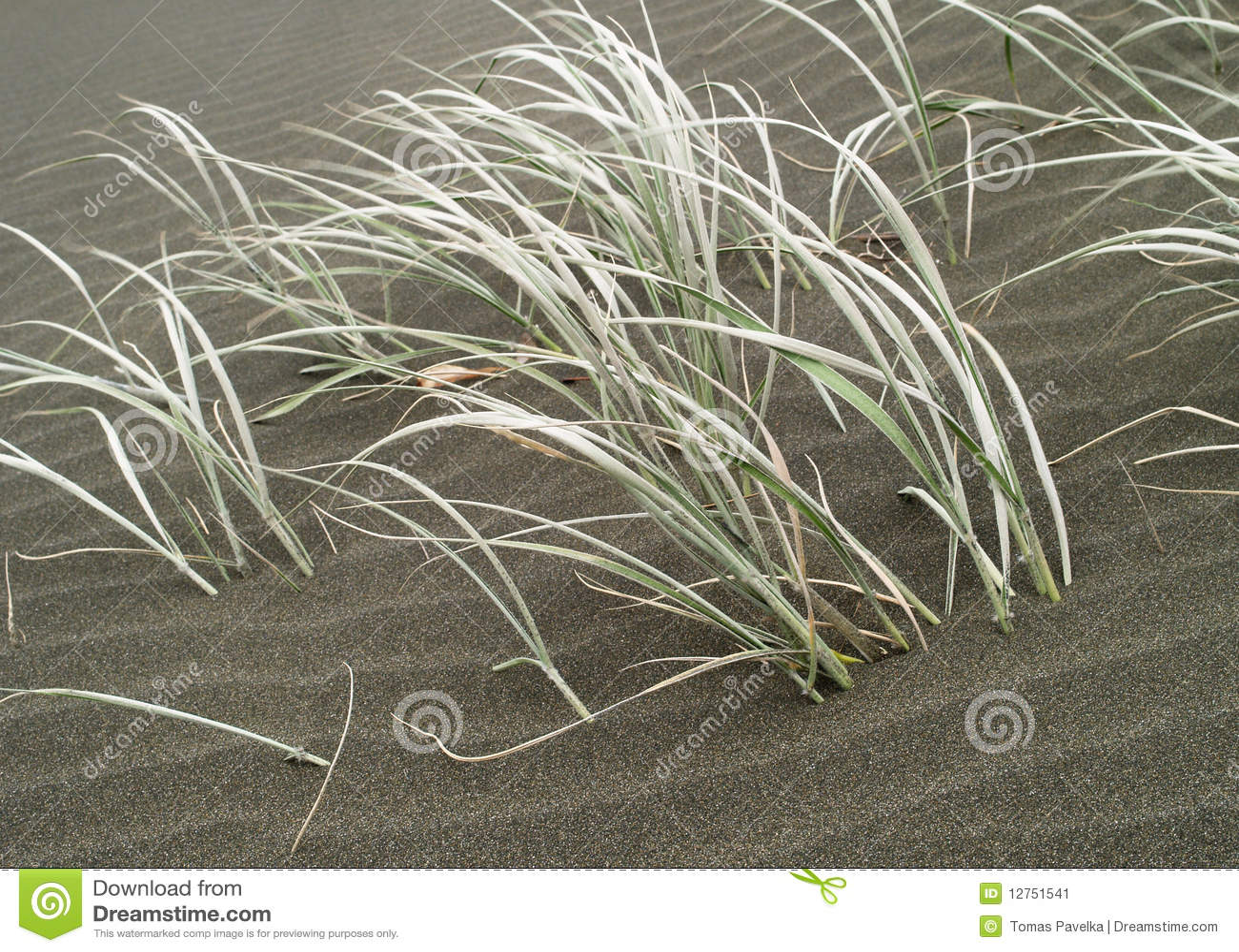 Gras en zand