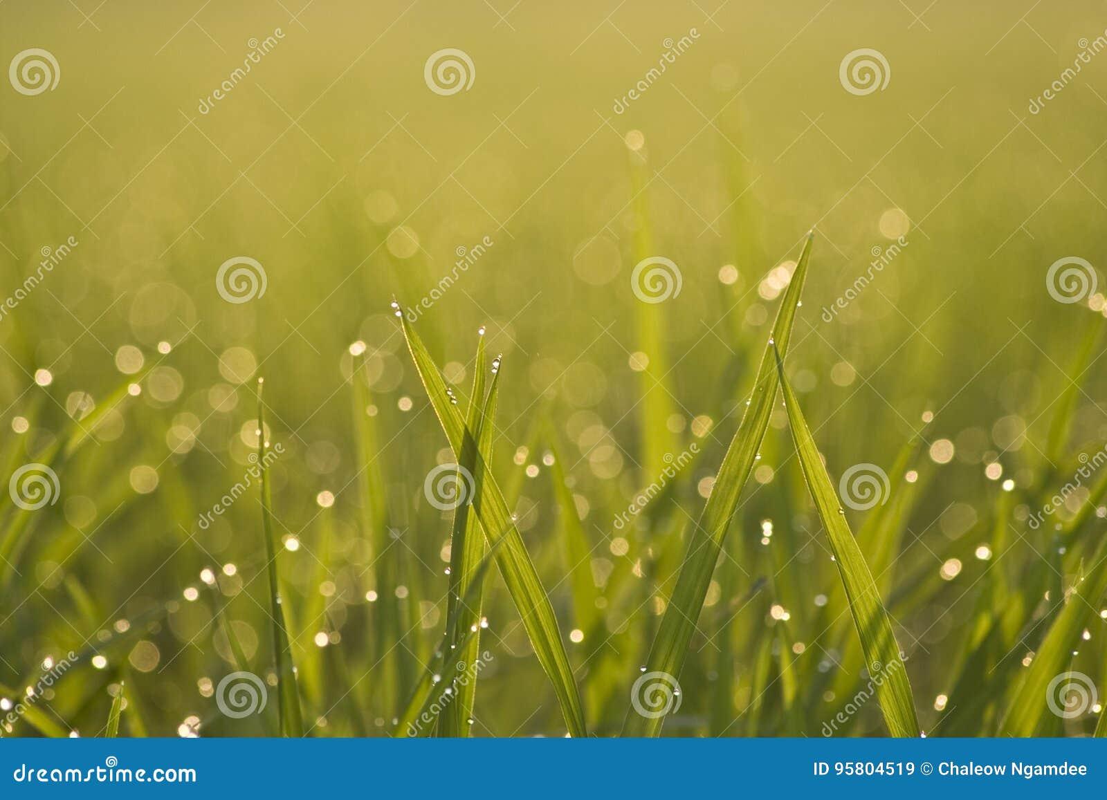 Gras groen in de ochtend