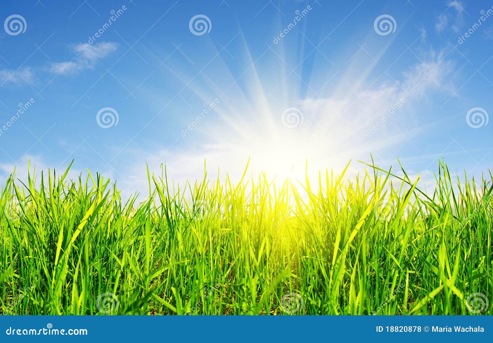 Gras, hemel en zon