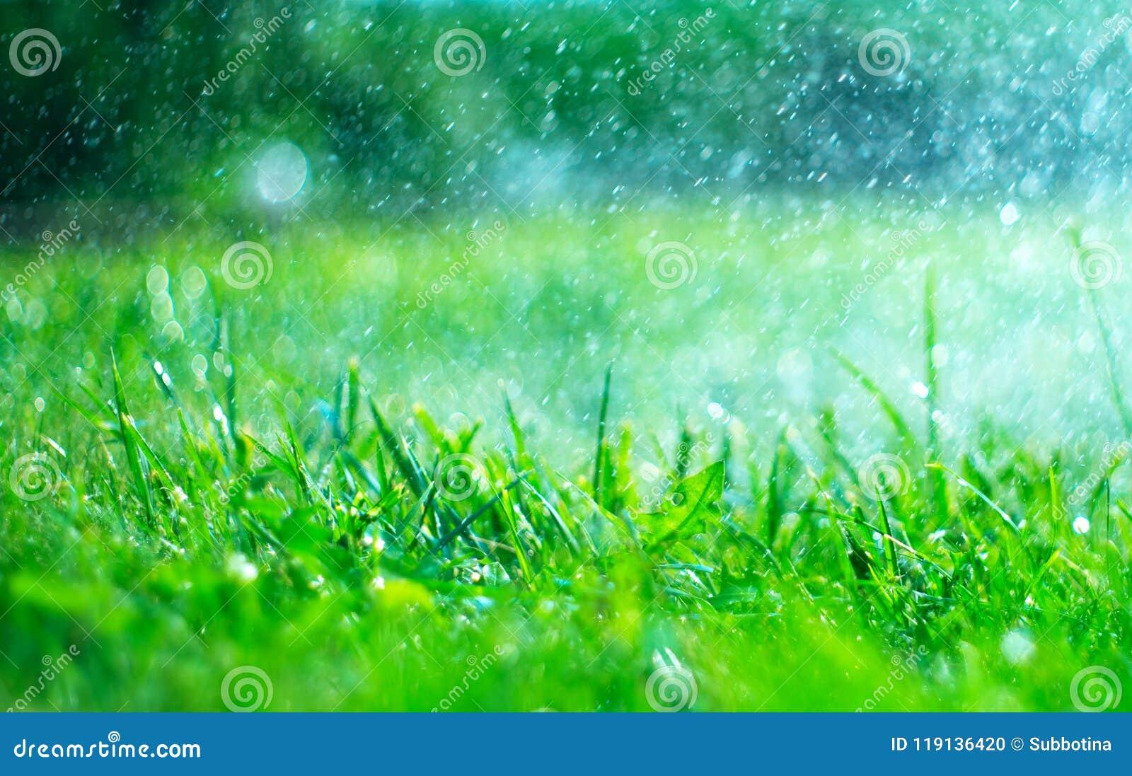 Gras mit Regentropfen Bewässerungsrasen Regen Unscharfer Hintergrund des grünen Grases mit Wasser lässt Nahaufnahme fallen nave u