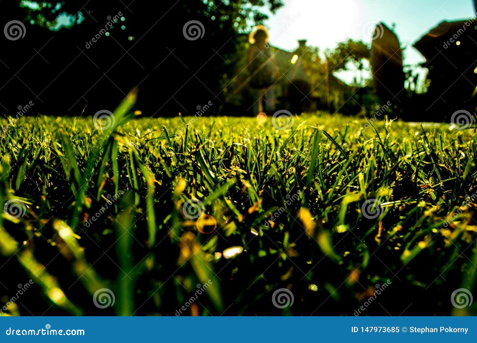 Gras in tuin dichte omhooggaand