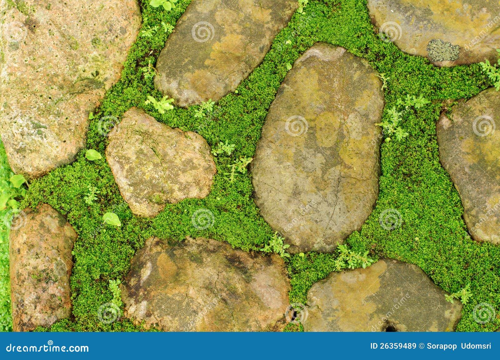 Gras zwischen Steinen