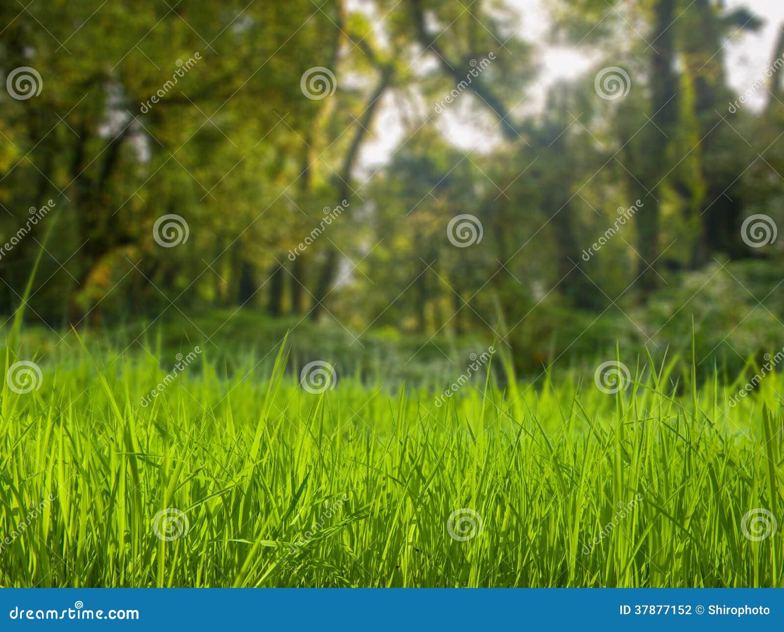 Grasgebied