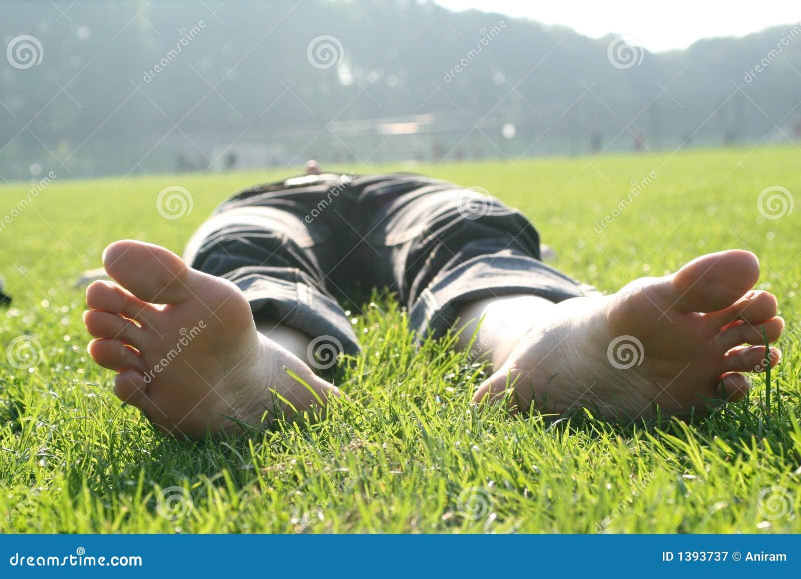 https://thumbs.dreamstime.com/z/grass-1393737.jpg