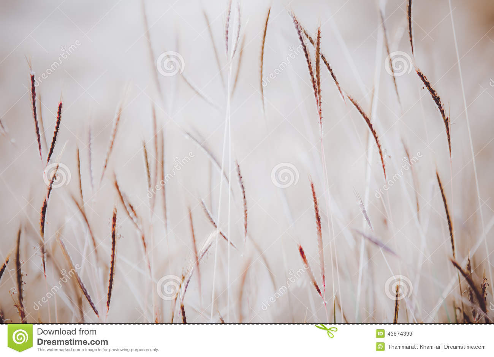 abstract grass wallpaper - photo #30