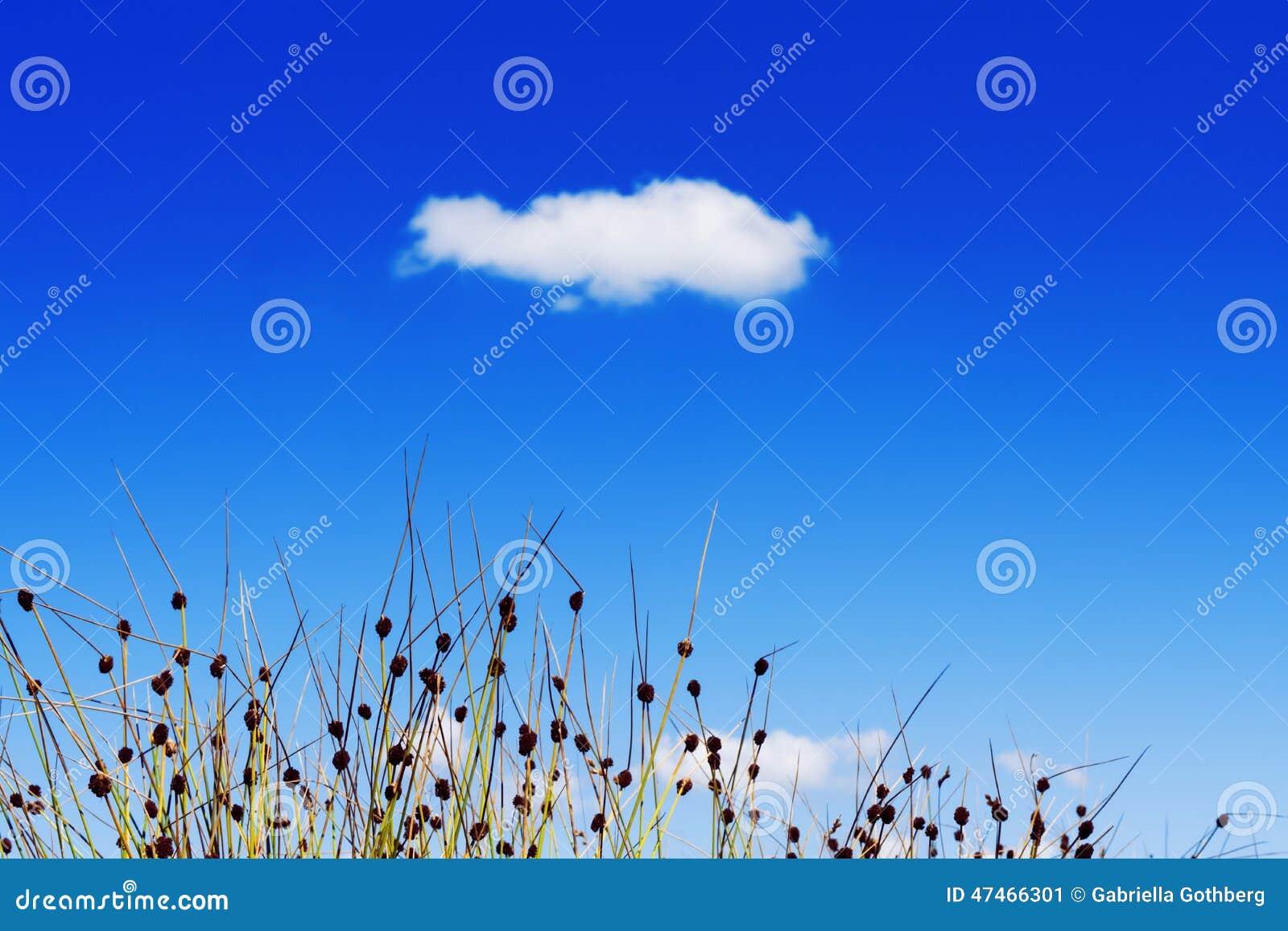 Grass against blue summer sky