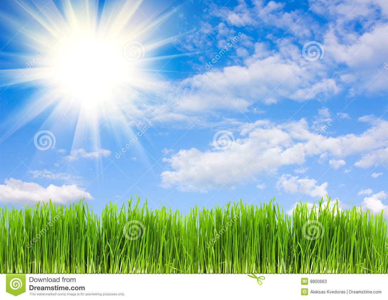 Grass On A Background Of Blue Sky Stock Image - Image of ...