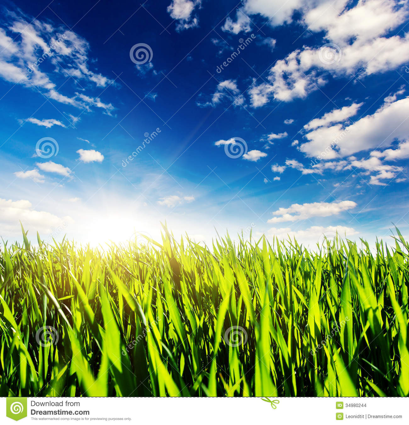 Grass stock photo. Image of grow, lawn, field, nature ...