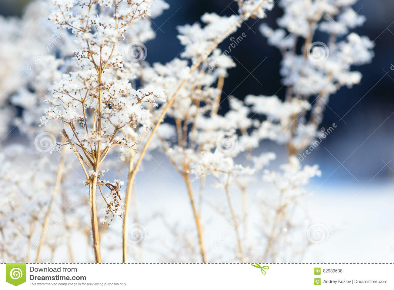 Grass Branches Frozen In The Ice. Frozen Grass Branch In ...