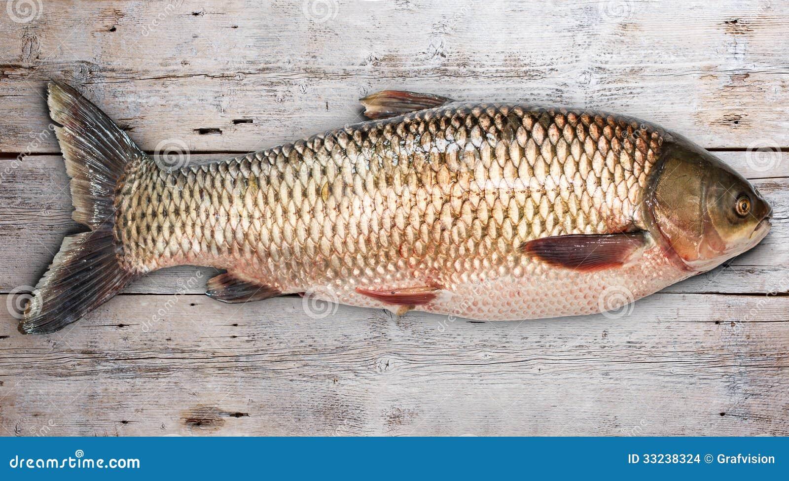 Grass carp stock photo image of carp angling industry for Grass carp fish