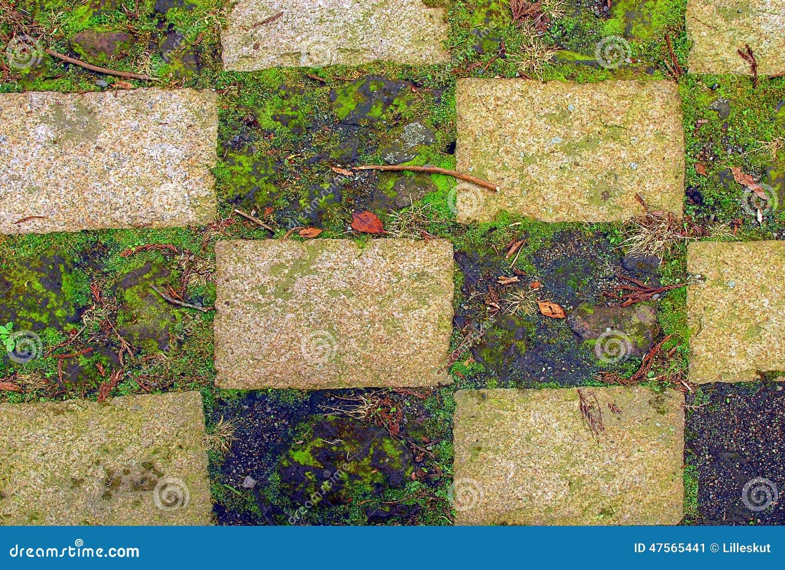 Grass checkerboard stock photo image 47565441 for Checkerboard garden designs
