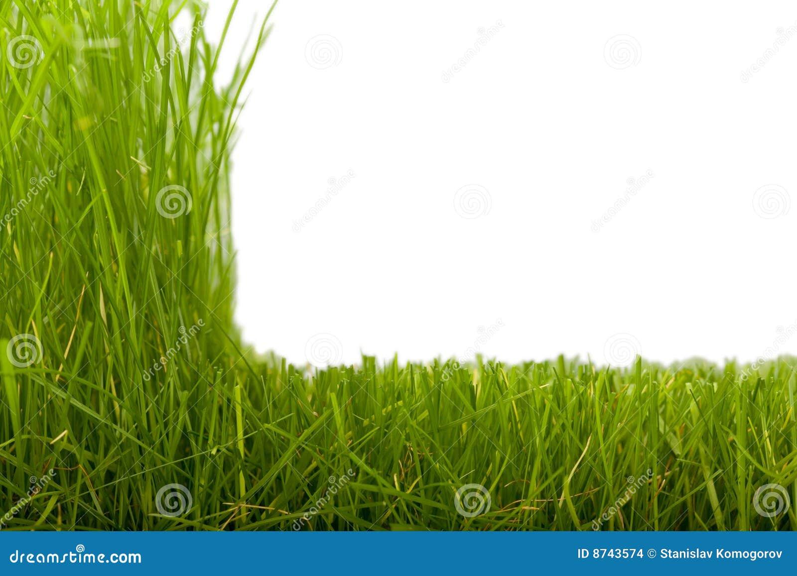 grass  u0026 cut grass stock images