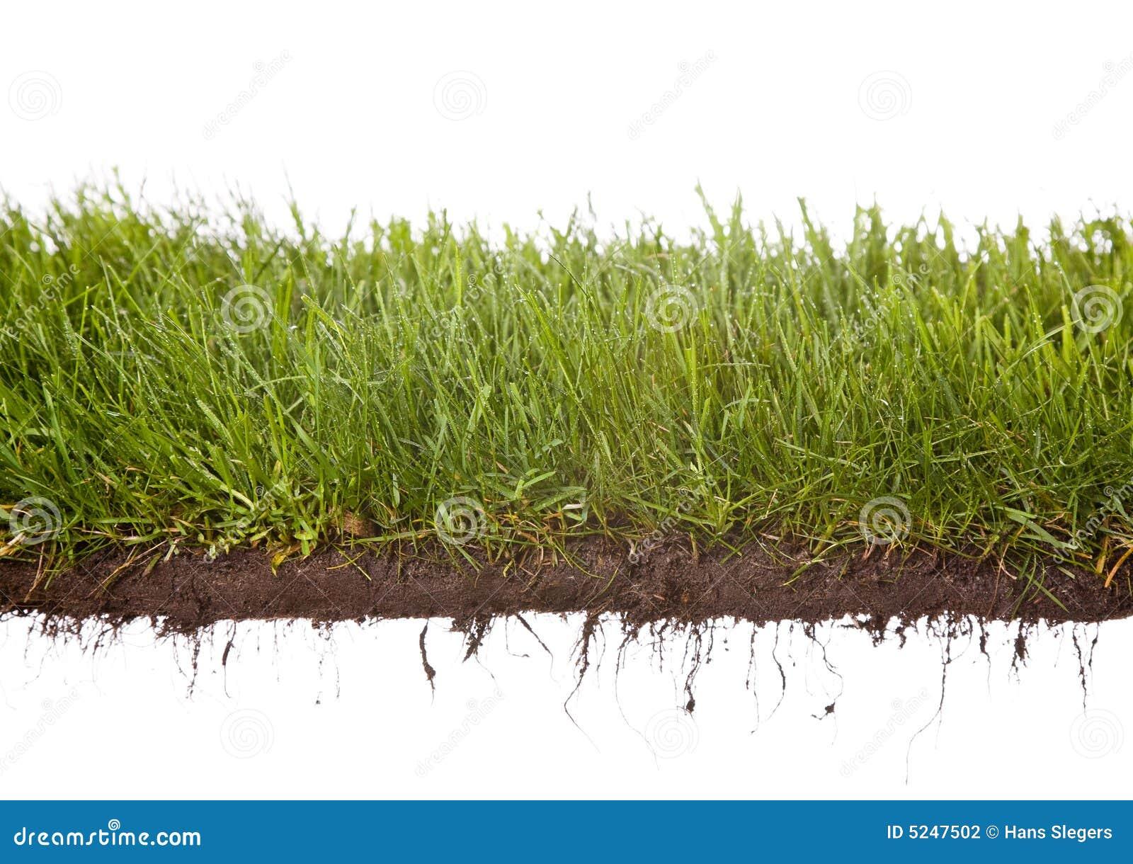 Grass dewdrops