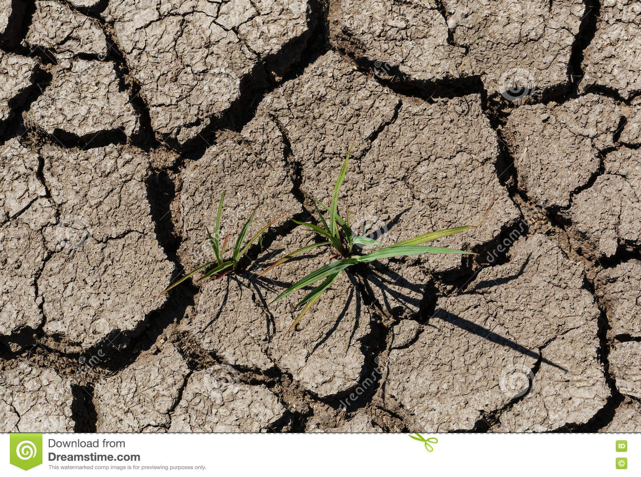 Plant growing through dry cracked soil royalty free stock for Soil and green