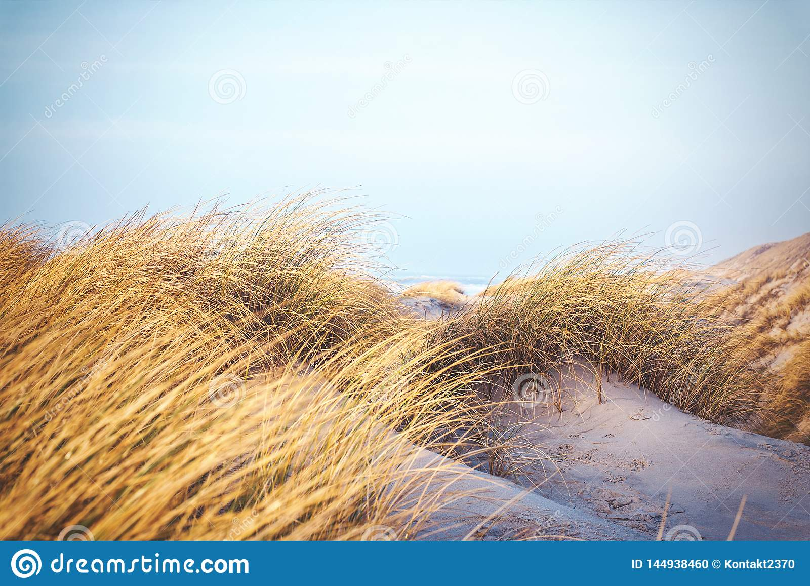 Grass in the dunes of Denmark